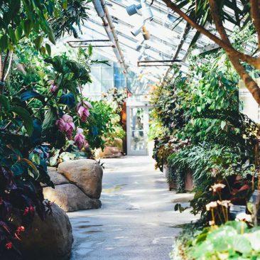 Creșterea recoltelor de flori, fructe și legume cu echipamente de iluminare cu LED