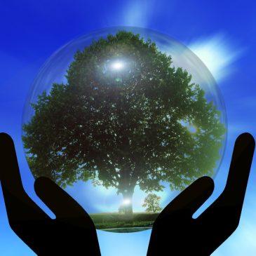 The Climate Group atenționează asupra urgenței adoptării iluminatului cu LED
